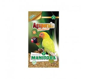 Manitoba agapornis parakeets kg 1