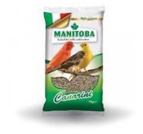 Manitoba canarini kg 1