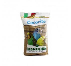 Manitoba cocorite kg 1
